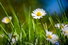 09715WS-Kaufmann Doris Fotoprofi DIGITAL 2017